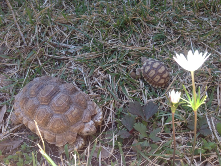 Tortoises and Flowers