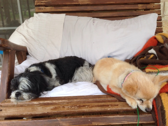 Two Old Dogs in a Rocking Chair